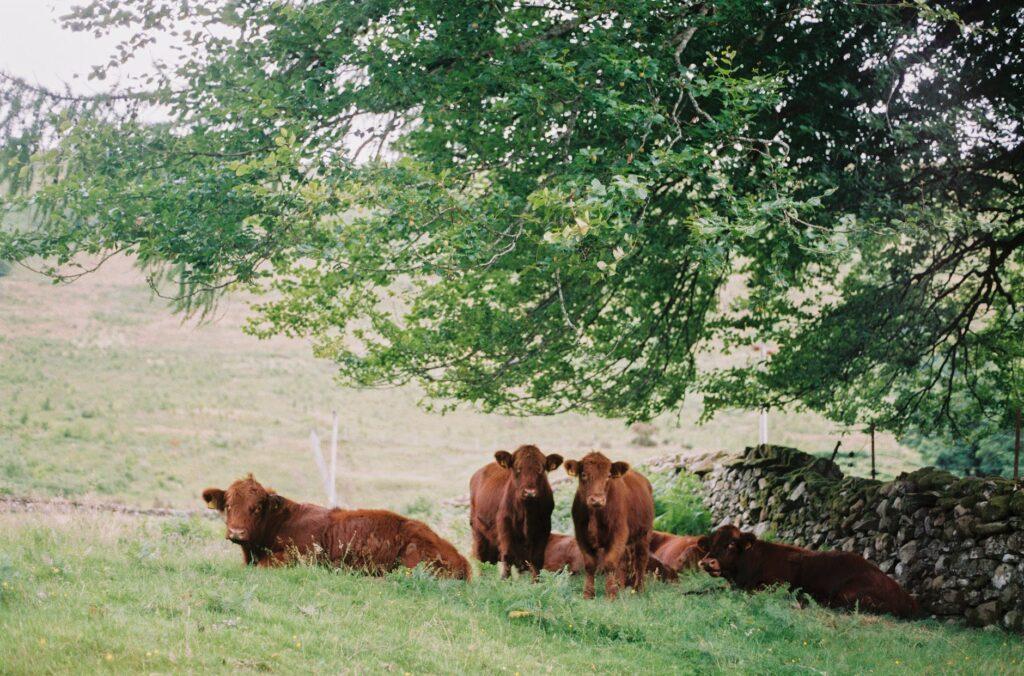 benessere animale - carne - its agroalimentare per il piemonte