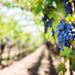 Consigli per bere vino nelle Langhe - Piemonte Italia - - Gastrowriters Antonio Astuto - Its Agroalimentare per il Piemonte